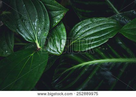 Dark Foliage Green Leaf Background Dark Foliage Green Leaf Background