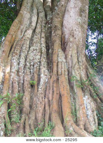Alter Baum 4