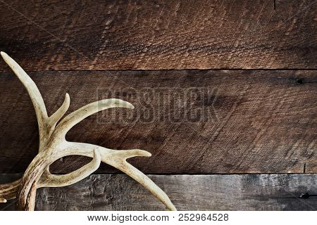 A Pair Of Real White Tail Deer Antlers Over A Rustic Wooden Background. They Are Used By Hunters Whe