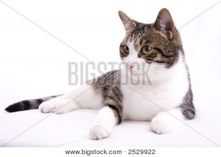 Lazy Housecat