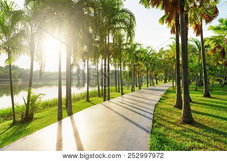 Trees And Walkway On Green Grass Field In The Park At Morning.
