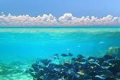 A shoal of blue fishes in Caribbean Sea under blue sky, Mexico poster