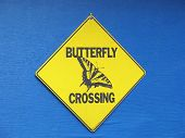 yellow butterfly crossing sign on blue background poster