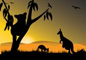 single koala two kangaroo and joey in the sunset poster