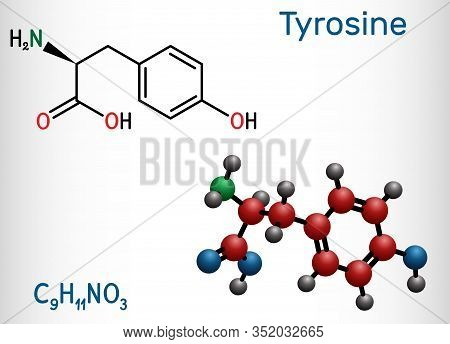 Tyrosine, L-tyrosine, Tyr, C9h11no3 Amino Acid Molecule. It Plays Role In Protein Synthesis, It Is P