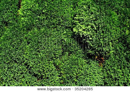 Green vibrant foliage background