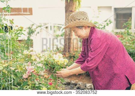 Old Elder Woman Resting In Flower Garden. Elderly Female Relaxing In Park. Senior Leisure Lifestyle