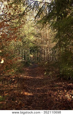 View Of A Small Forest Path In The Sababurg Primeval Forest, Hofgeismar, Germany