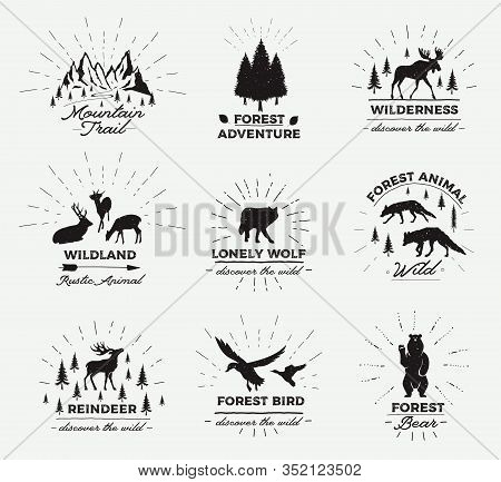 Outdoor Vector Emblems. Set Of Wilderness Quotes, And Design Elements. Deers Silhouettes, Forest, Tr