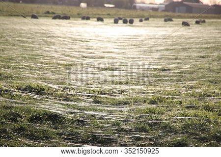 Lines Of Light Over The Meadow In Moordrecht Caused By Sun Shining In The Dew Drops On The Grass