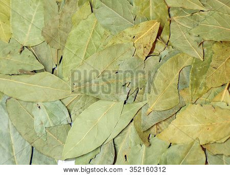 Bay Leaves For Cooking Dishes In The Background. Background Of Dry Bay Leaves. Fragrant And Fragrant