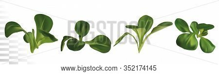 3d Realistic Lambs Lettuce On White Background. Fresh Green Salad. Concept Food. Salad For Your Menu