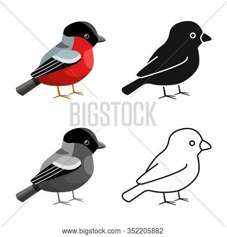 Isolated Object Of Bullfinch And Bird Logo. Collection Of Bullfinch And Robin Vector Icon For Stock.