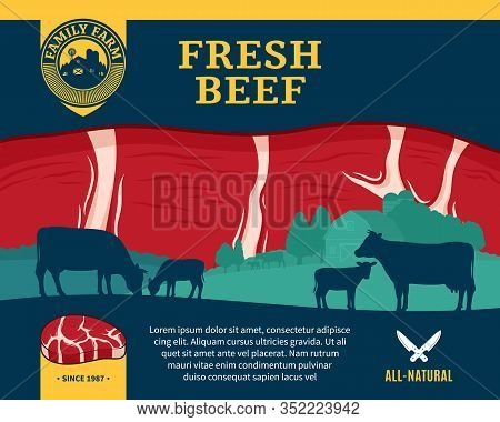 Vector Beef Illustration With Cows, Calves, Farm And Steak