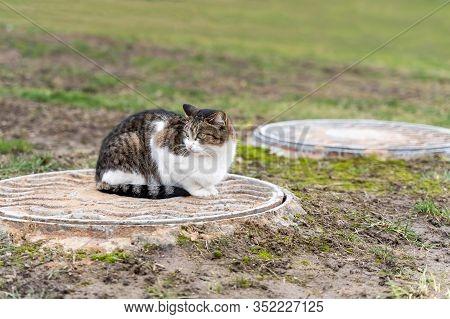 Cat Sitting On Sewer Manhole, Stock Photo