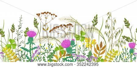 Seamless Horizontal Border With Autumn Meadow Plants And Wild Flowers. Floral Pattern With Fading Gr