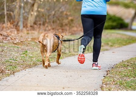Training Exercise With Dog On Leash Running Healthy Lifestyle