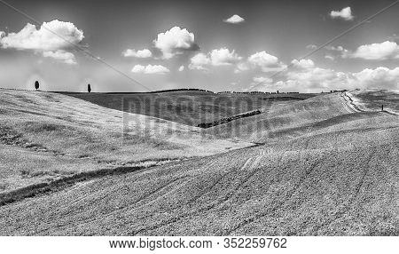 Landscape Of Dry Fields In The Countryside In Tuscany, Italy. Concept For Agriculture And Farmlands