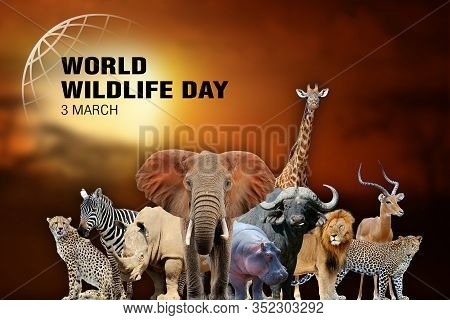 World Wildlife Day. Text  On Many Animal Background. March 3