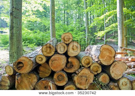 Wood in the forest