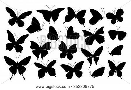 Black Butterfly Silhouettes. Butterflies Icons, Flying Insects. Isolated Abstract Art Spring Symbols