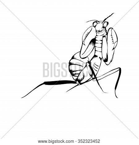 Sketch Design Vector Photo Free Trial Bigstock