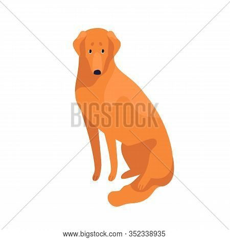 Attractive Clever Golden Retriever Dog Breed Vector Flat Illustration. Cute Domestic Animal Sitting
