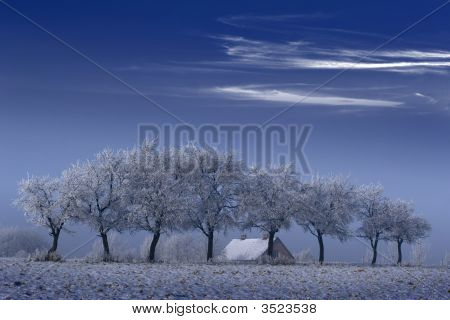 Trees And House In Winter