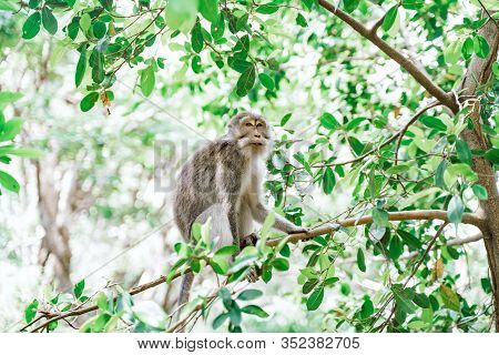 Portrait Of A Female Macaque Sitting On A Tree Against The Background Of The Jungle. A Monkey Climbs