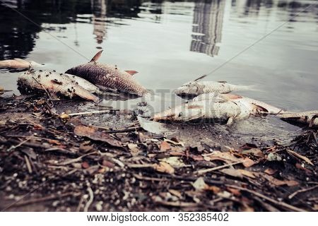 Dead Fish Floated With Fly And Plastic Bottles And Other Trash In The Dark Water, Water Pollution, R