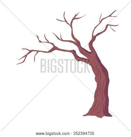 Tree With Naked Branches, Dry Wood Without Leaves Isolated On White Background, Winter Or Autumn Sea