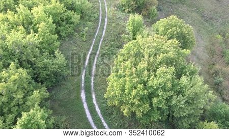 Narrow Road Through Green Grove. Narrow Winding Path Going Through Green Bushes And Trees