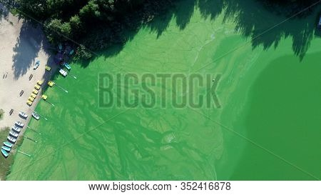 Standing Calm Water Of The Lake Bloomed In Summer. Algae Bloom From The Heat In The Water. The Water