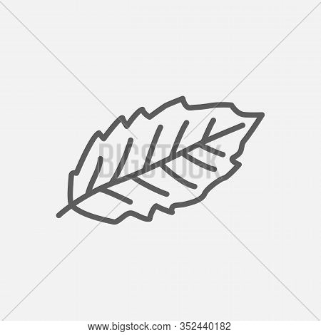 Hornbeam Leaf Icon Line Symbol. Isolated Vector Illustration Of Icon Sign Concept For Your Web Site