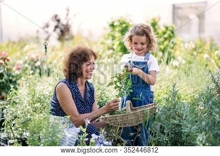 Small Girl With Senior Grandmother Gardening In The Backyard Garden.