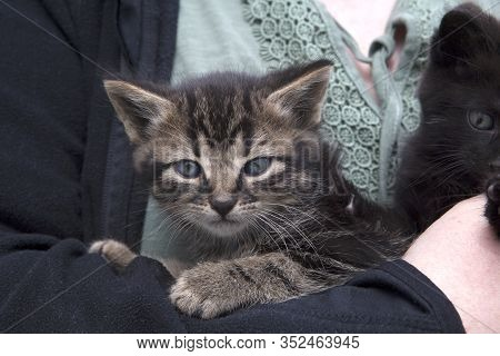 Two Young Kitten Sit On The Arm