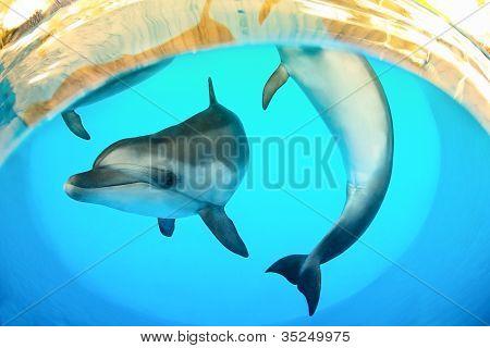 Grappige mariene dolfijnen