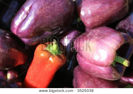 Fresh Peppers  - Purple And Red