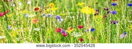 Banner, Natural Habitat For Insects, Wildflowers And Wild Herbs On A Flower Field