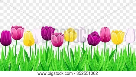 Seamless Row Of Vector Colorful Tulips With Leaves. Set Of Isolated Spring Flowers. Collection Of Be