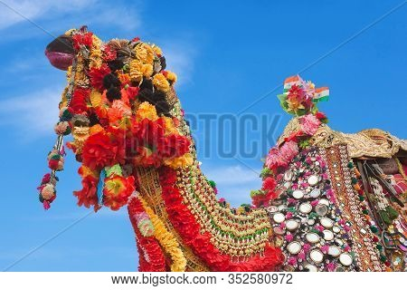 Beautiful Decorated Camel At Bikaner Camel Fesrival In Rajasthan, India. The Camel Festival Begins W