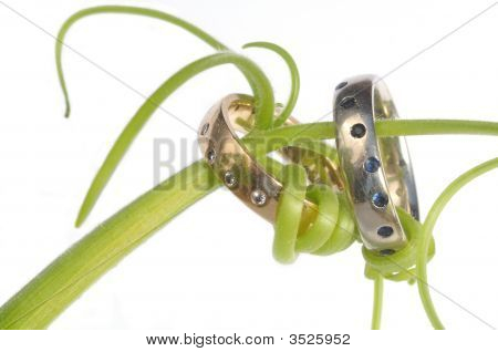 Green Tendrils Around Two Wedding Bands