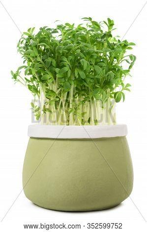 Watercress (lepidium Sativum) In Vase  Isolated On White