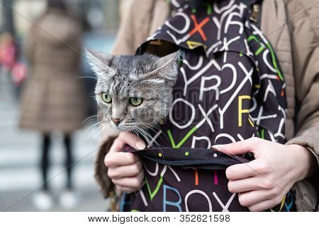 Girl Carry Cat In Backpack. Funny Domestic Cat Portrait. Close Up Of Domestic Cat In Backpack. Cat.