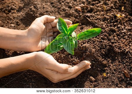 Fresh Young Plant Growth In Soil In Hand. Plant, Tree As Symbol Of Start New Life, Care About Nurtur
