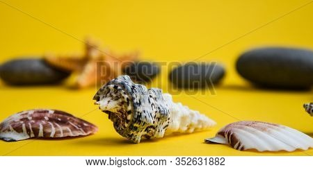 Nautical, Marrine Concept. Sea Shell With Stones Against A Yellow Background With Copy Space. Summer