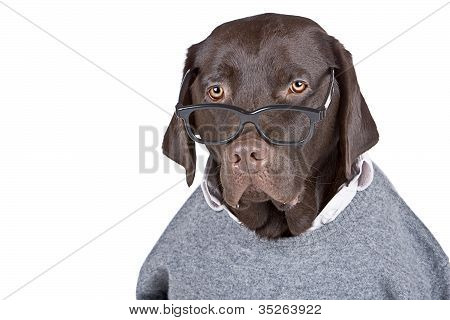 Clever Looking Dog