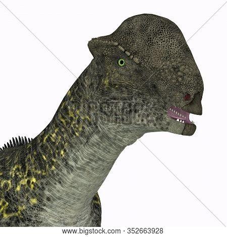 Stegoceras Dinosaur Head 3d Illustration - Stegoceras Was A Herbivorous Dome-headed Dinosaur That Li