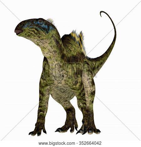 Tenontosaurus Dinosaur On White 3d Illustration - Tenontosaurus Was An Ornithopod Herbivorous Dinosa