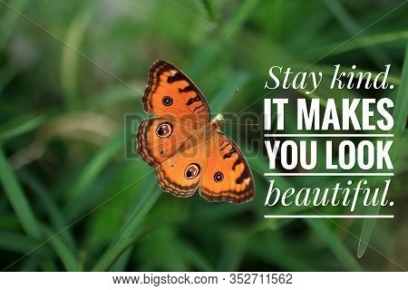 Inspirational Quote - Stay Kind. It Makes You Look Beautiful. With Beautiful Orange Butterfly Flying